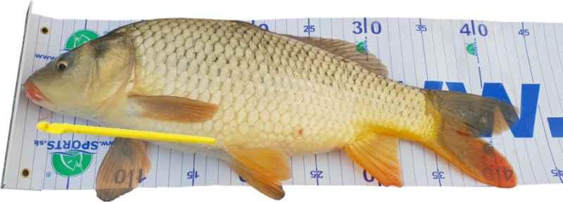 Rybářský metr podložka 100x50 cm + uvolňovač háčků